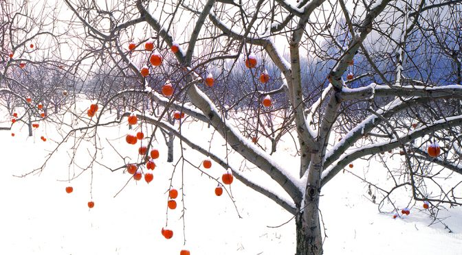 To your Good Health – Wassail!